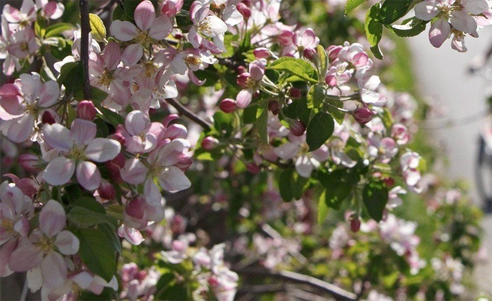 Frühling im Eisacktal – Farbenfrohe Blütenpracht auf dem Marxhof