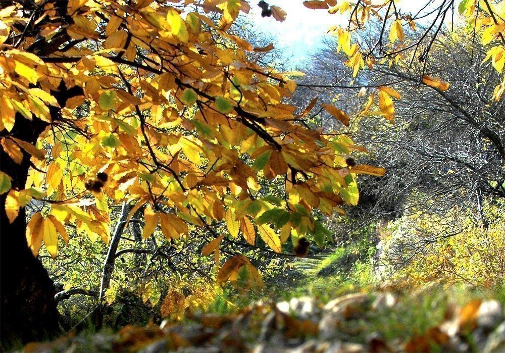 Wanderungen im Herbst: Farbenpracht im Eisacktal